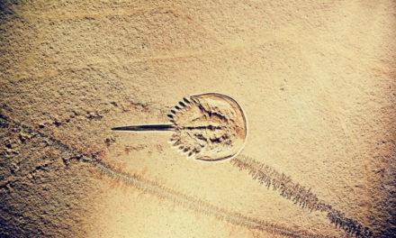 Εξέλιξη; Τα απολιθώματα λένε όχι!